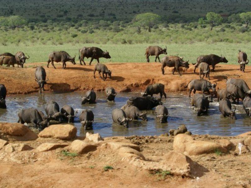 Amboseli2 - Kenya tour