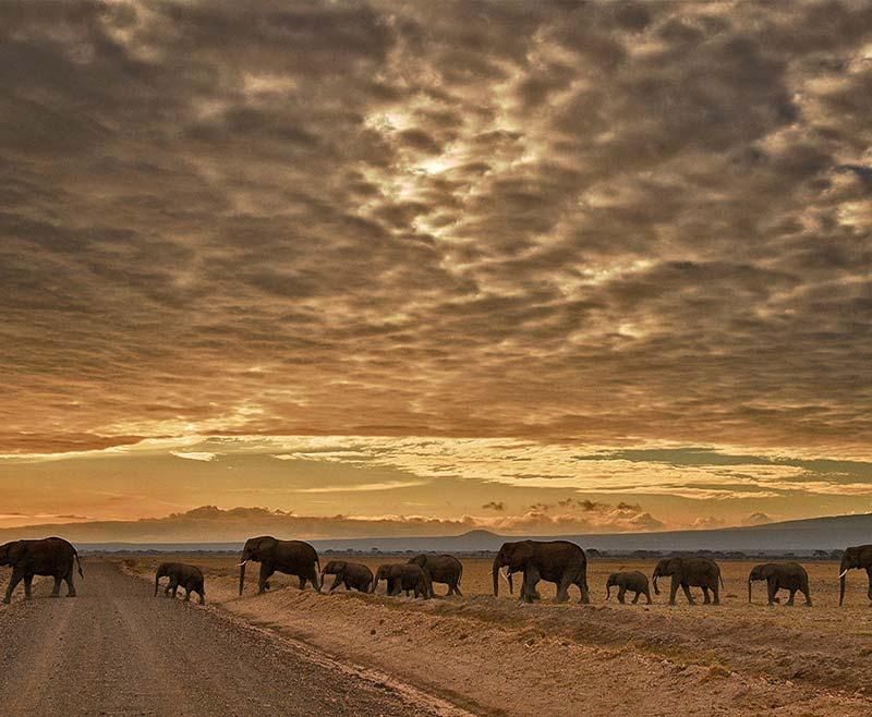 Safari-Tsavo-Est-e-Amboseli-1