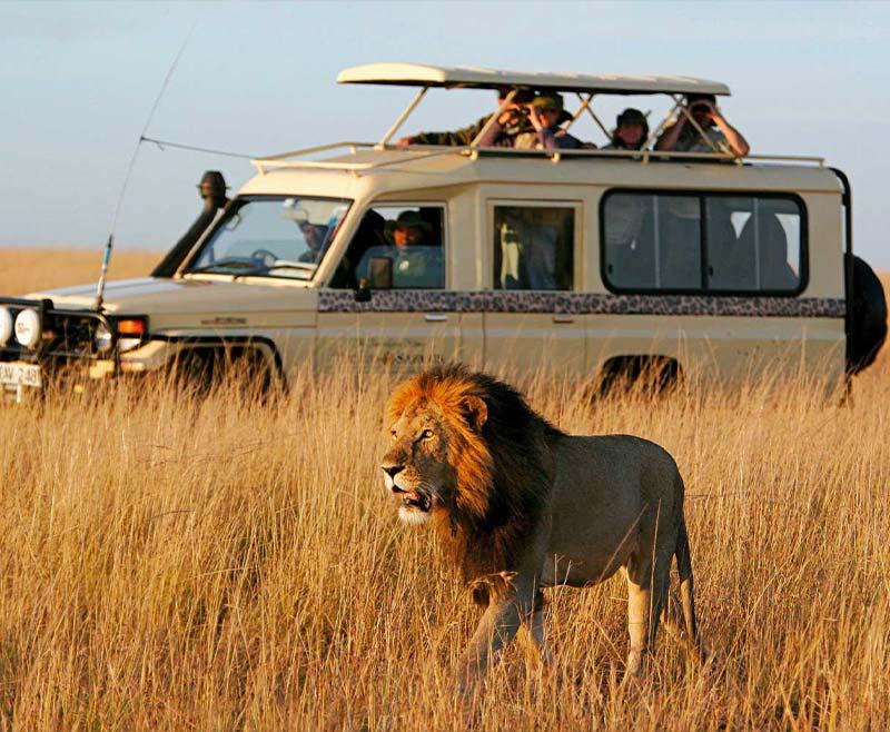 Safari-Tsavo-Est-e-Amboseli-5