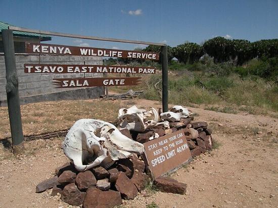 ingresso al parco nazionale - Kenya tour