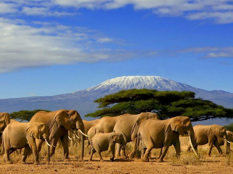 Amboseli - Kenya tour