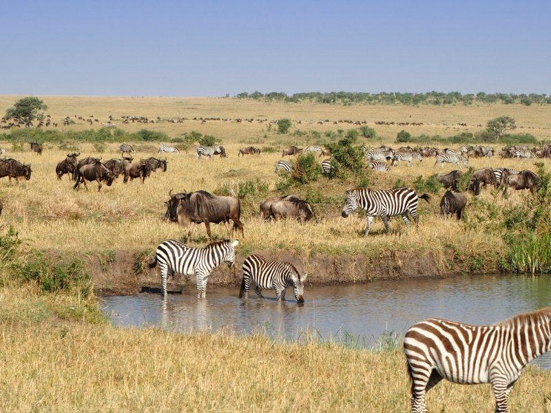 Masai Mara zebre2 - Kenya tour