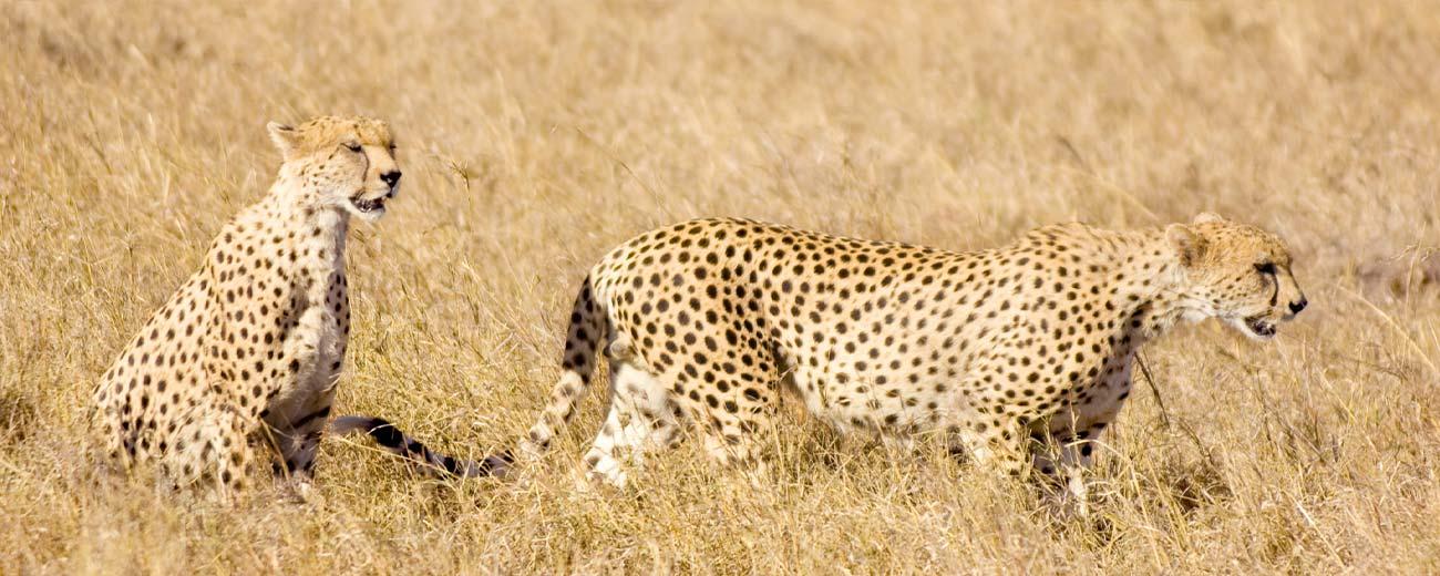 Safari Masai Mara . Lago Nakuru . Amboseli . Taita Hills