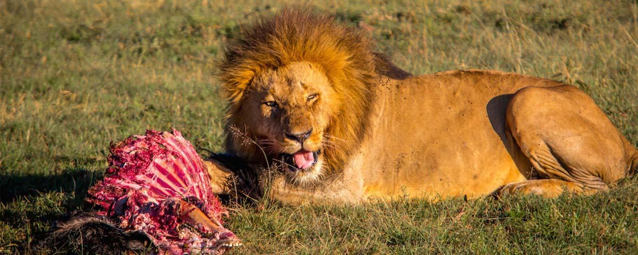 Safari-Masai-Mara-.-Lago-Nakuru-.-Amboseli-.-Taita-Hills-.-Tsavo-Est-4