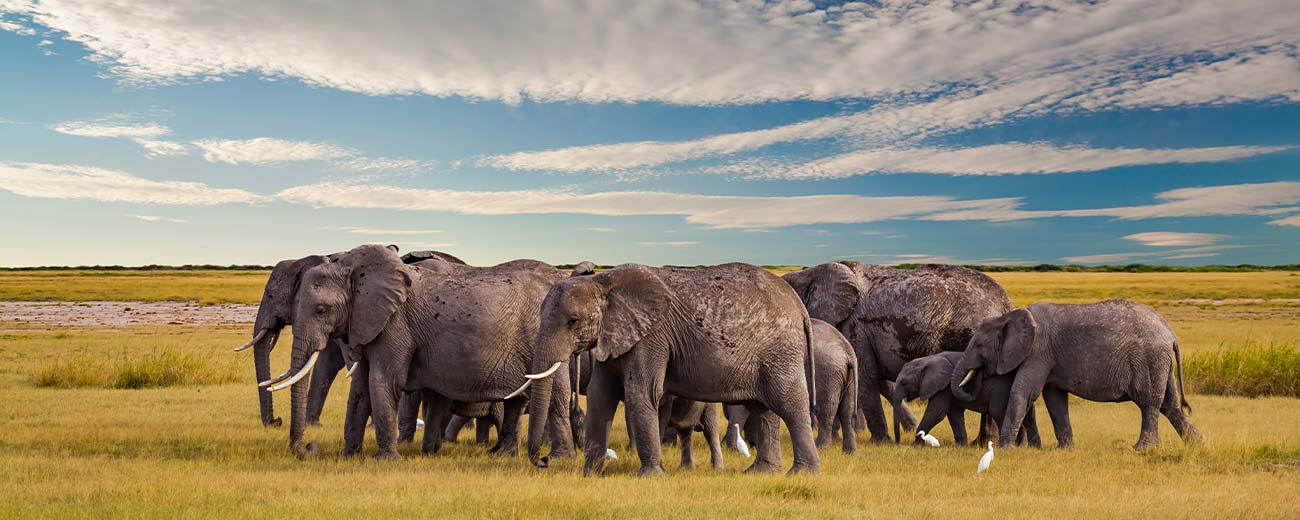 Safari-Masai-Mara-.-Lago-Nakuru-.-Amboseli-.-Taita-Hills-.-Tsavo-Est-5