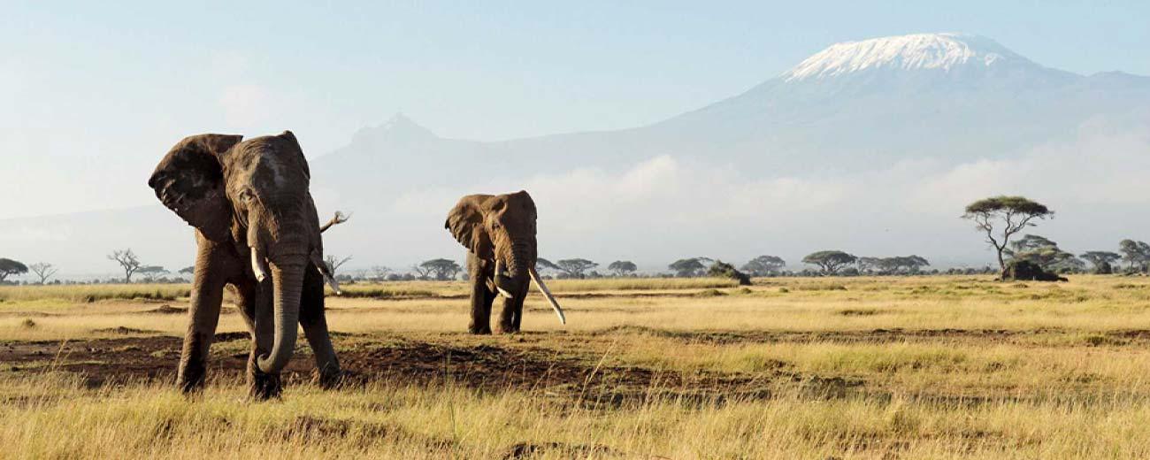 Safari-Masai-Mara-.-Lago-Nakuru-.-Amboseli-.-Taita-Hills-.-Tsavo-Est-6