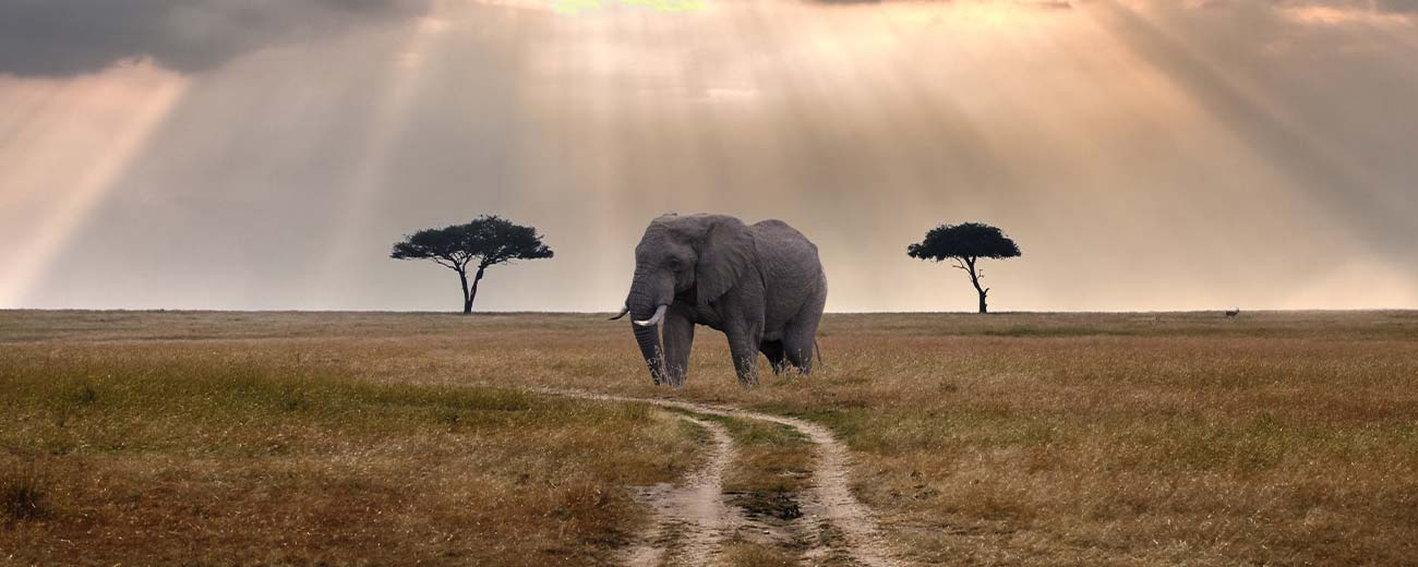 Safari-Masai-Mara-.-Lago-Nakuru-.-Amboseli-.-Taita-Hills-.-Tsavo-Est