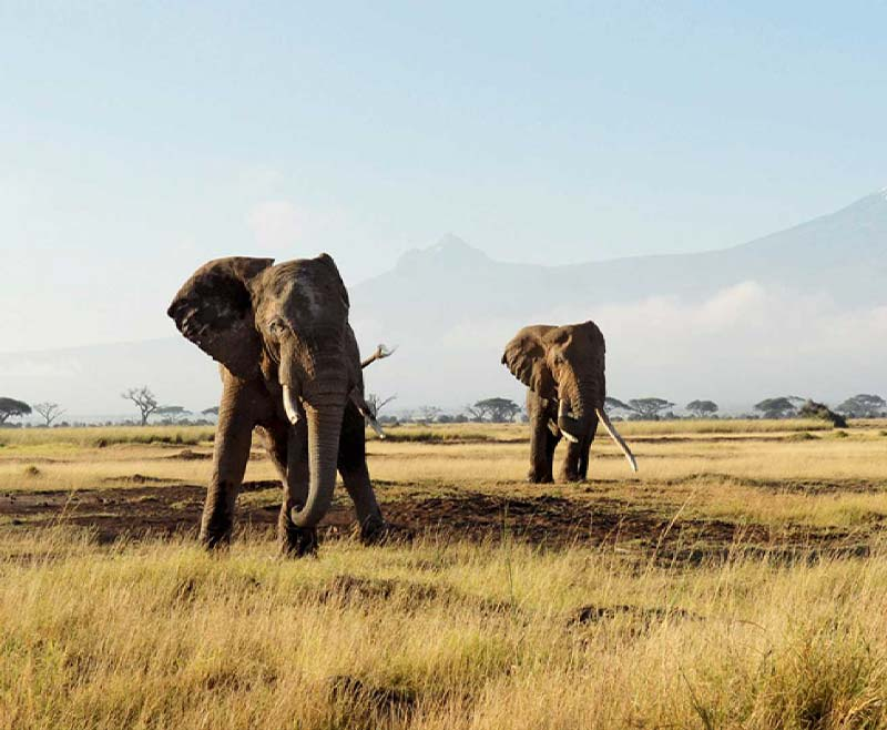 Safari-Taita-Hill-.-Amboseli-.-Tsavo-Est—2