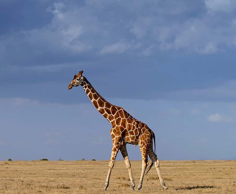 Safari-Taita-Hill-.-Amboseli-.-Tsavo-Est—4