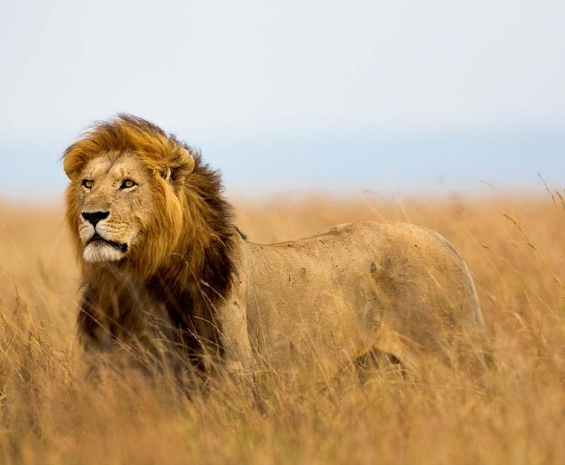 Safari-Taita-Hill-Amboseli-Tsavo-Est-3
