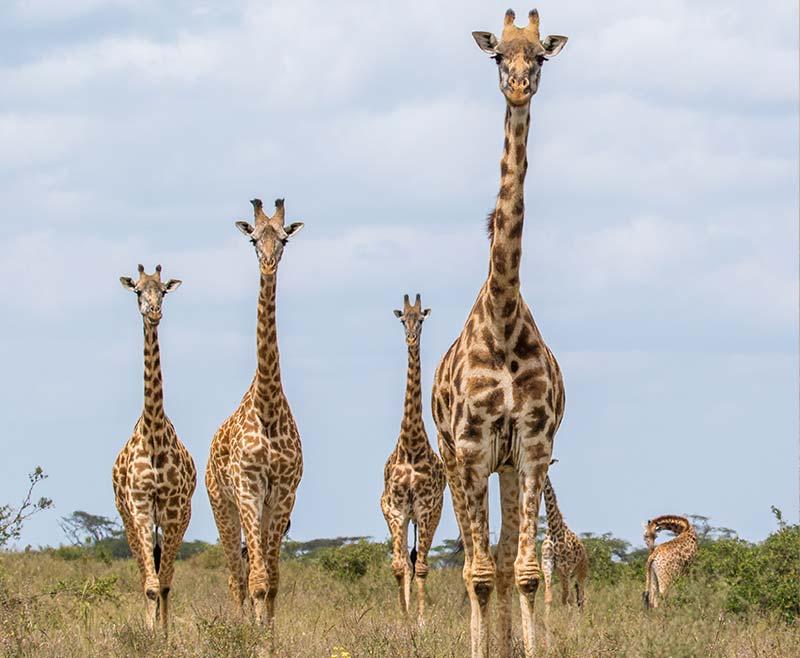 Safari-Tsavo-Ovest-.-Amboseli-.-Taita-Hill-.-Tsavo-Est-10