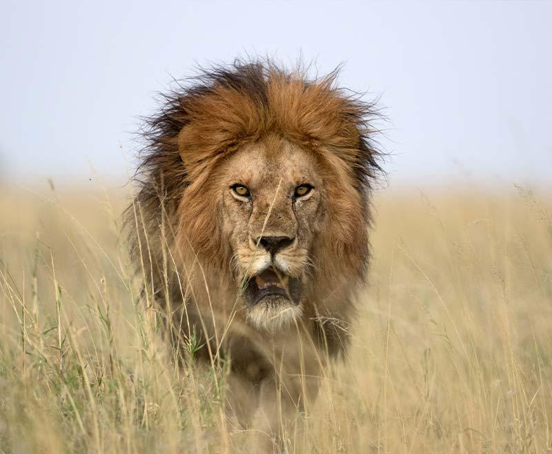 Safari-Tsavo-Ovest-.-Amboseli-.-Taita-Hill-.-Tsavo-Est-3
