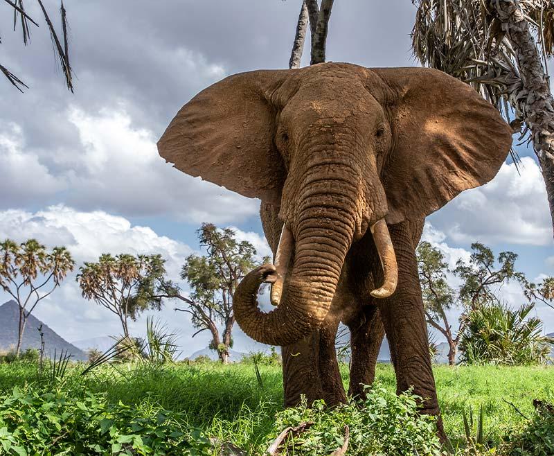 Safari-Tsavo-Ovest-.-Amboseli-.-Taita-Hill-.-Tsavo-Est-7