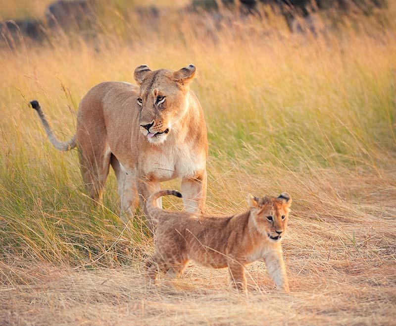Safari-Tsavo-Ovest-.-Amboseli-.-Taita-Hill-.-Tsavo-Est-9
