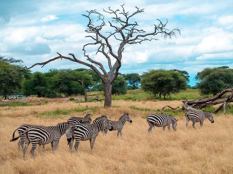Safari Tsavo Ovest . Amboseli . Taita Hills . Tsavo Est - Tour in Kenya