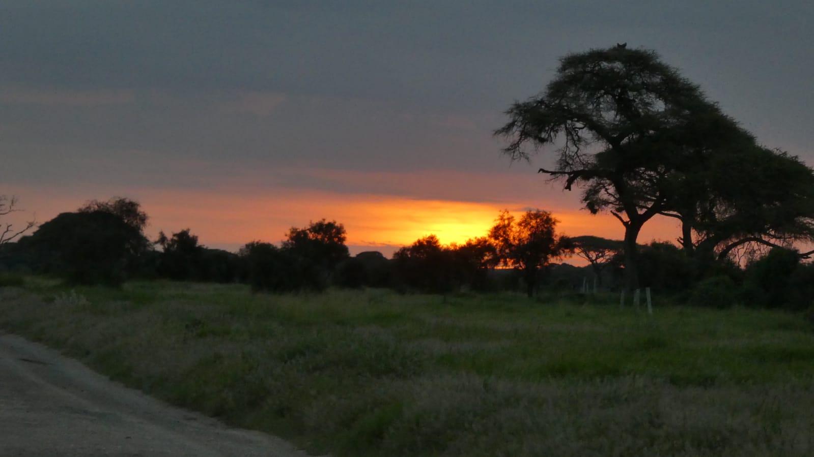 WhatsApp Image 2020 01 26 at 18.31.57 1 - Safari Masai Mara . Lago Nakuru . Amboseli . Tsavo Est