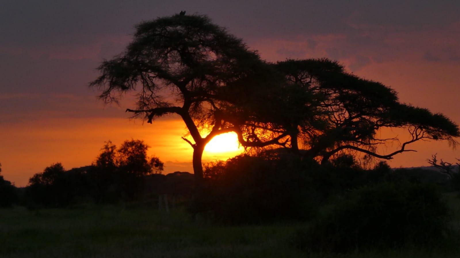 WhatsApp Image 2020 01 26 at 18.31.58 - Safari Masai Mara . Lago Nakuru . Amboseli . Tsavo Est