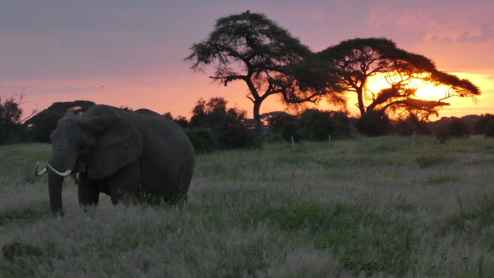 WhatsApp Image 2020 01 26 at 18.31.59 1 - Safari Masai Mara . Lago Nakuru . Amboseli . Tsavo Est