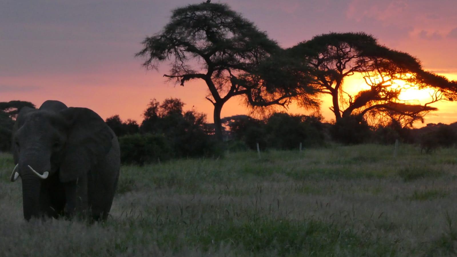 WhatsApp Image 2020 01 26 at 18.31.59 - Safari Masai Mara . Lago Nakuru . Amboseli . Tsavo Est