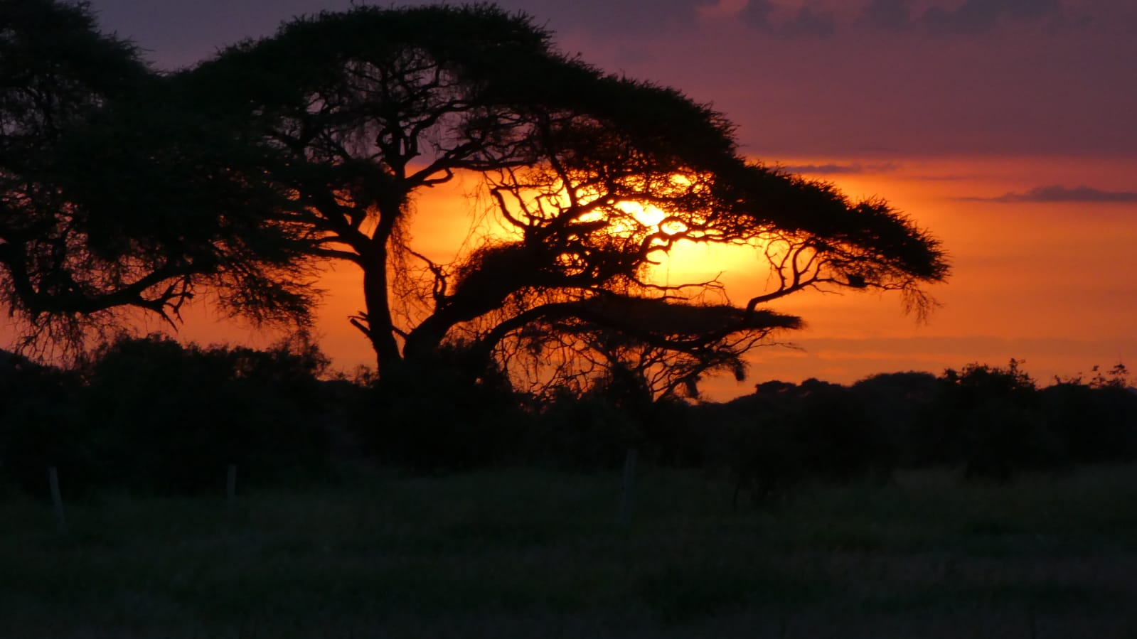 WhatsApp Image 2020 01 26 at 18.32.00 1 - Safari Masai Mara . Lago Nakuru . Amboseli . Tsavo Est