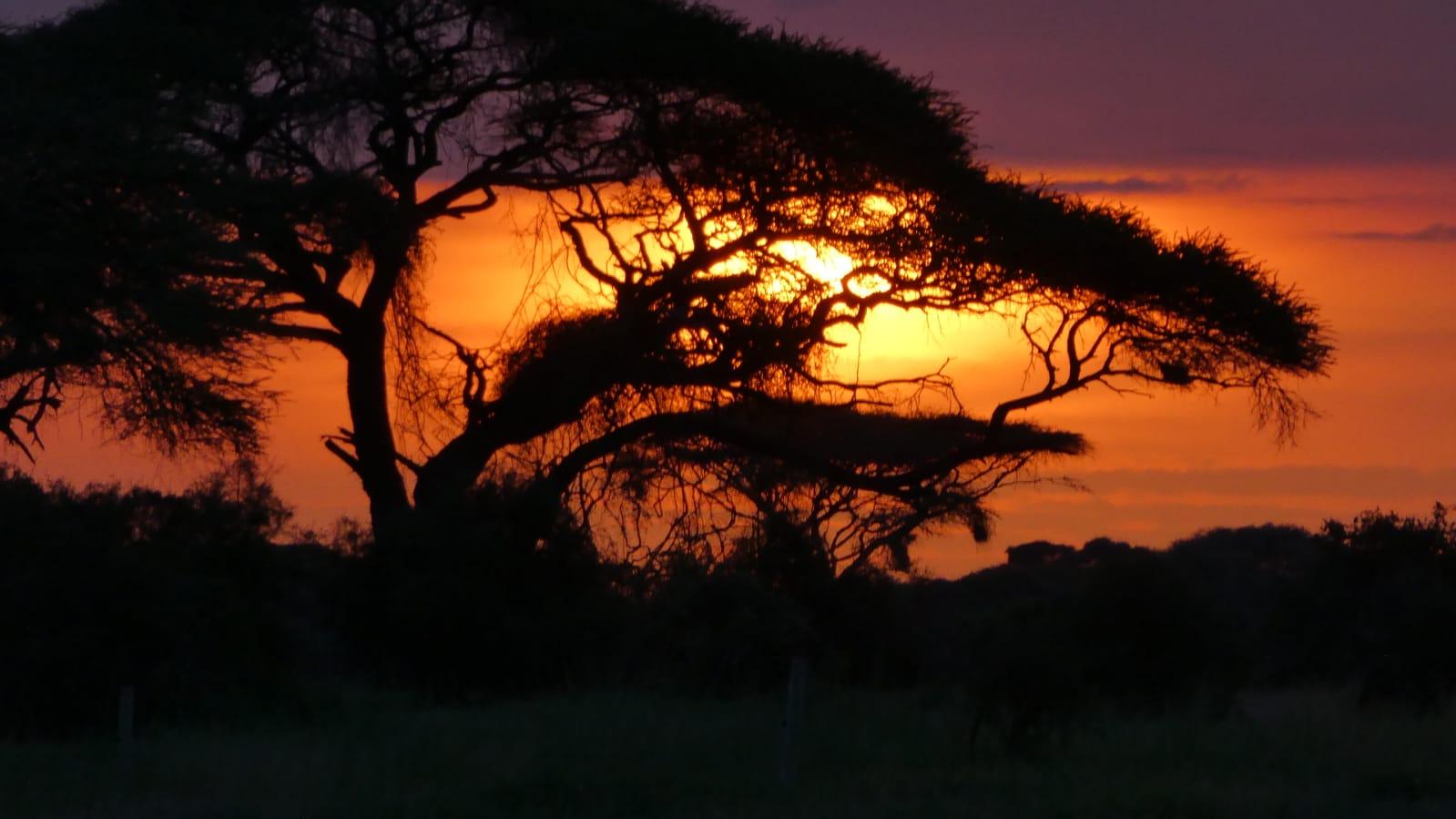 WhatsApp Image 2020 01 26 at 18.32.00 - Safari Masai Mara . Lago Nakuru . Amboseli . Tsavo Est