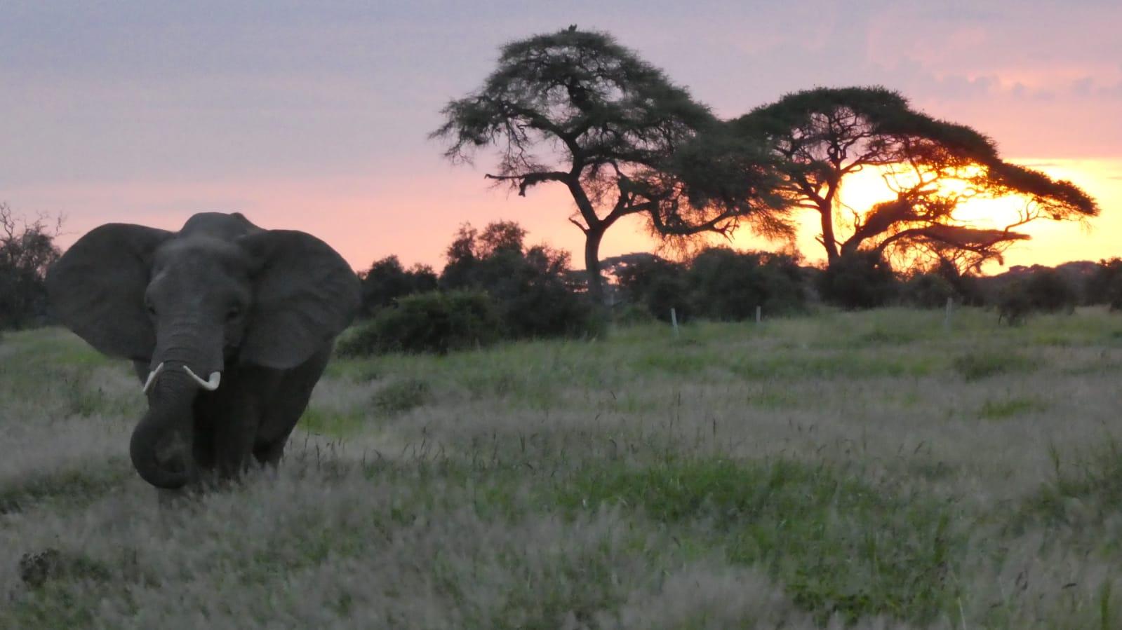 WhatsApp Image 2020 01 26 at 18.32.01 1 - Safari Masai Mara . Lago Nakuru . Amboseli . Tsavo Est