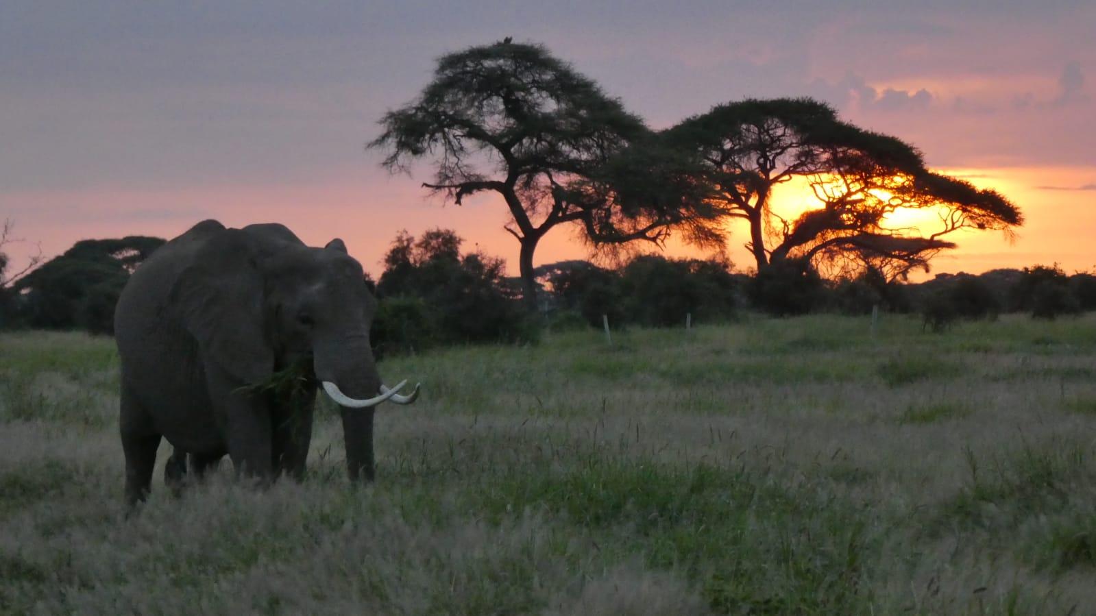 WhatsApp Image 2020 01 26 at 18.32.02 - Safari Masai Mara . Lago Nakuru . Amboseli . Tsavo Est
