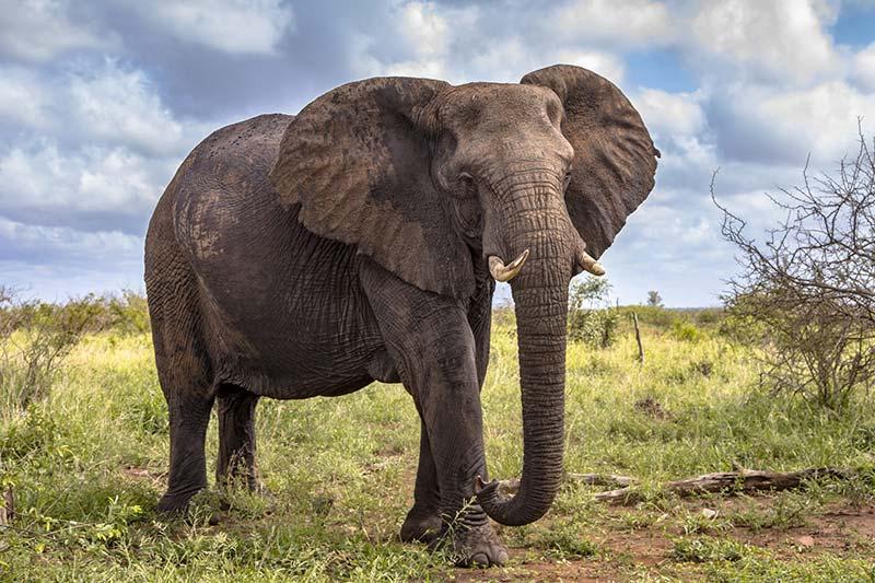 safari-masai-mara-1