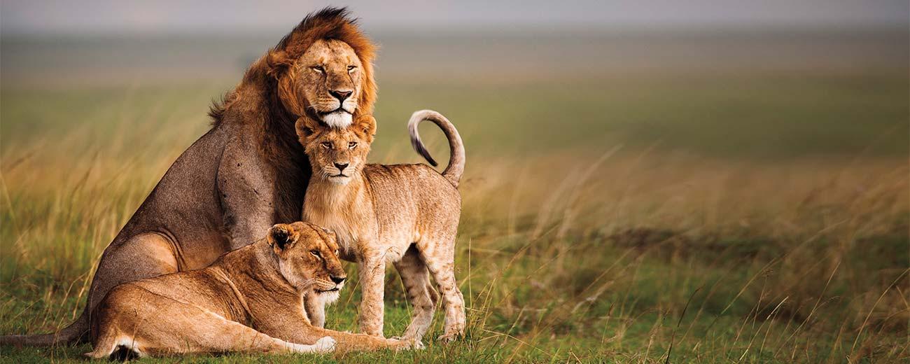 Safari Tsavo Est . 1 giorno