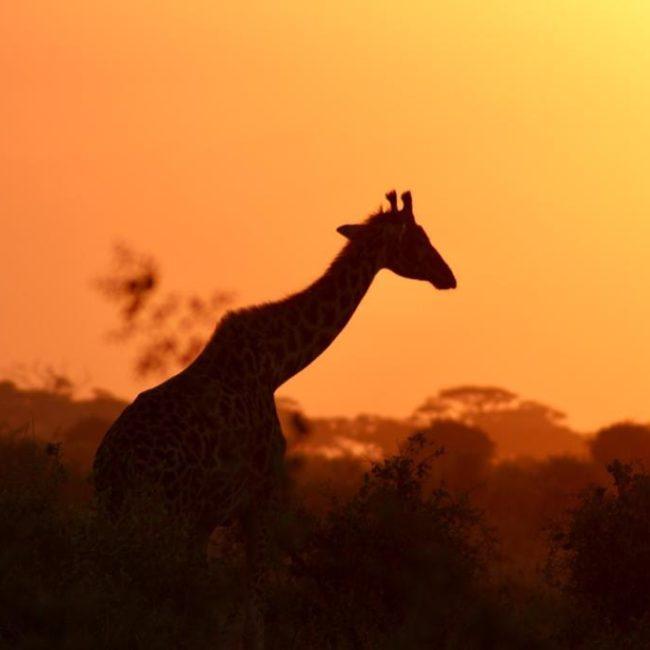 Kenya con guida sul pezzo