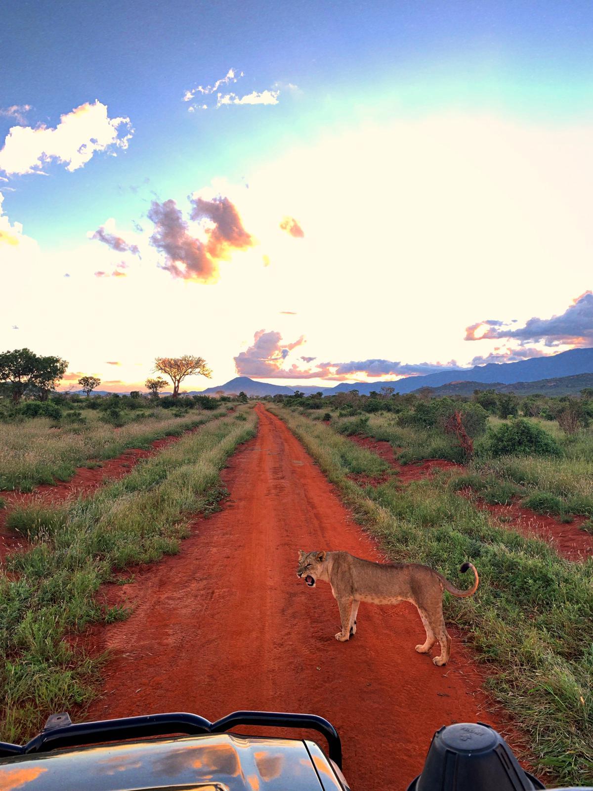 WhatsApp Image 2019 12 16 at 13.45.27 - Safari Masai Mara . Lago Nakuru . Amboseli . Taita Hills . Tsavo Est