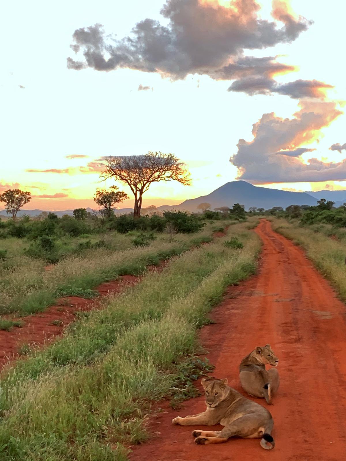 WhatsApp Image 2019 12 16 at 13.45.28 - Safari Samburu . Olpejeta . Lago Nakuru . Lago Bogoria . Lago Naivasha . Masai Mara . Nairobi . Amboseli . Tsavo Ovest . Taita Hills . Tsavo Est