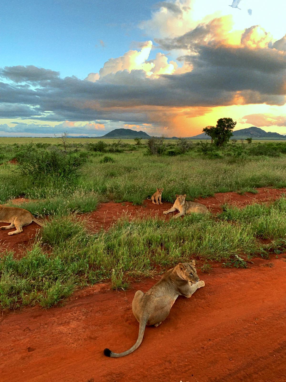 WhatsApp Image 2019 12 16 at 13.45.29 - Safari Masai Mara . Lago Nakuru . Amboseli . Taita Hills . Tsavo Est