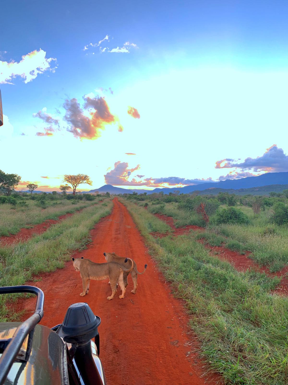 WhatsApp Image 2019 12 16 at 13.45.30 - Safari Samburu . Olpejeta . Lago Nakuru . Lago Bogoria . Lago Naivasha . Masai Mara . Nairobi . Amboseli . Tsavo Ovest . Taita Hills . Tsavo Est
