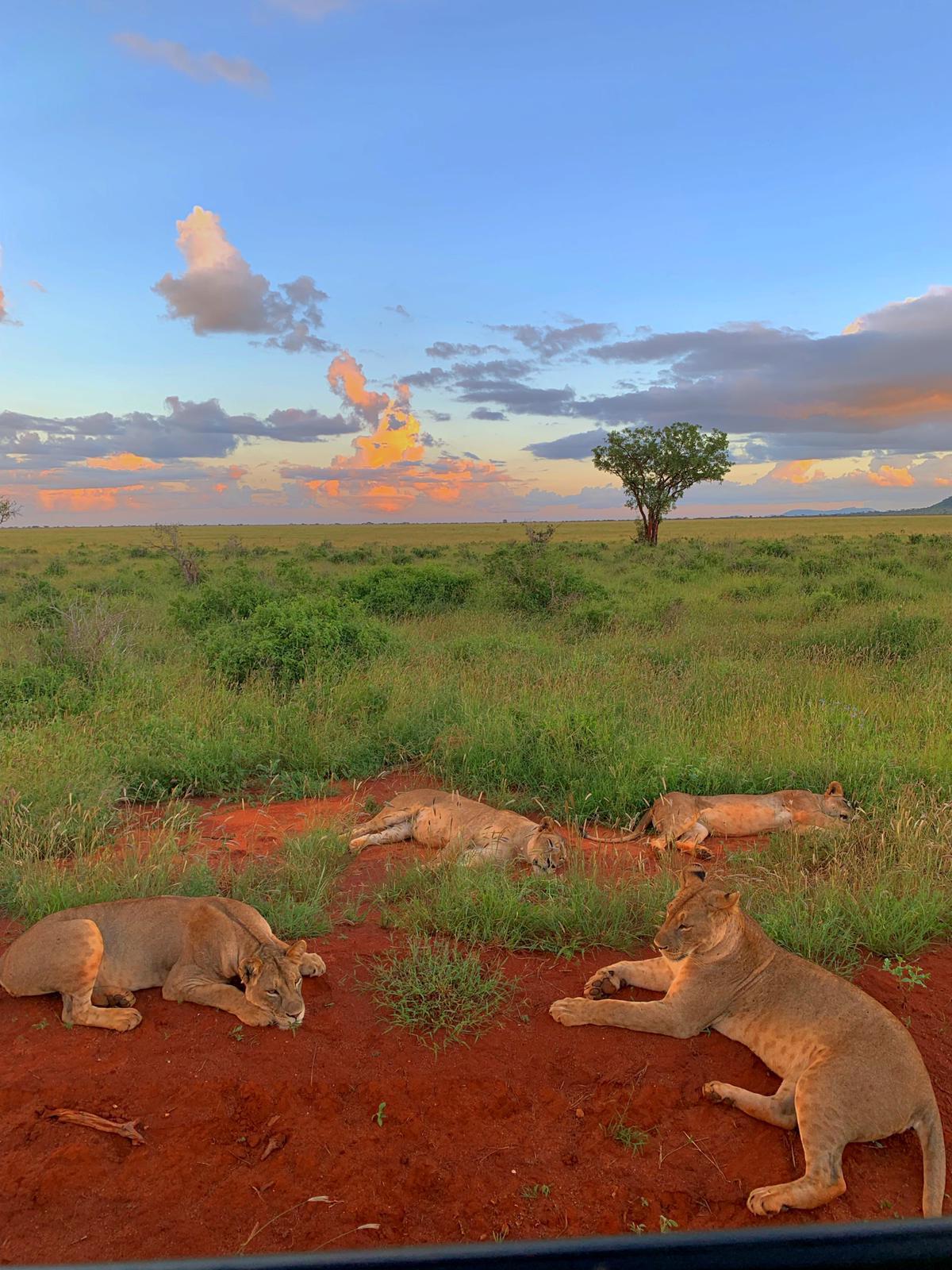 WhatsApp Image 2019 12 16 at 13.45.301 - Safari Masai Mara . Lago Nakuru . Amboseli . Taita Hills . Tsavo Est