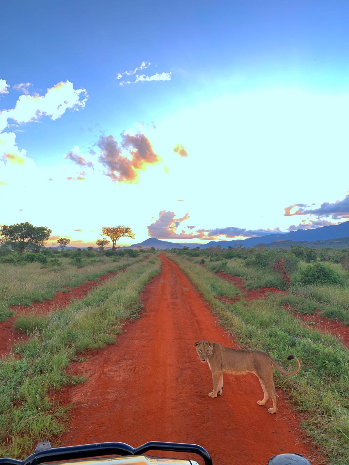 WhatsApp Image 2019 12 16 at 13.45.311 - Safari Masai Mara . Lago Nakuru . Amboseli . Taita Hills . Tsavo Est