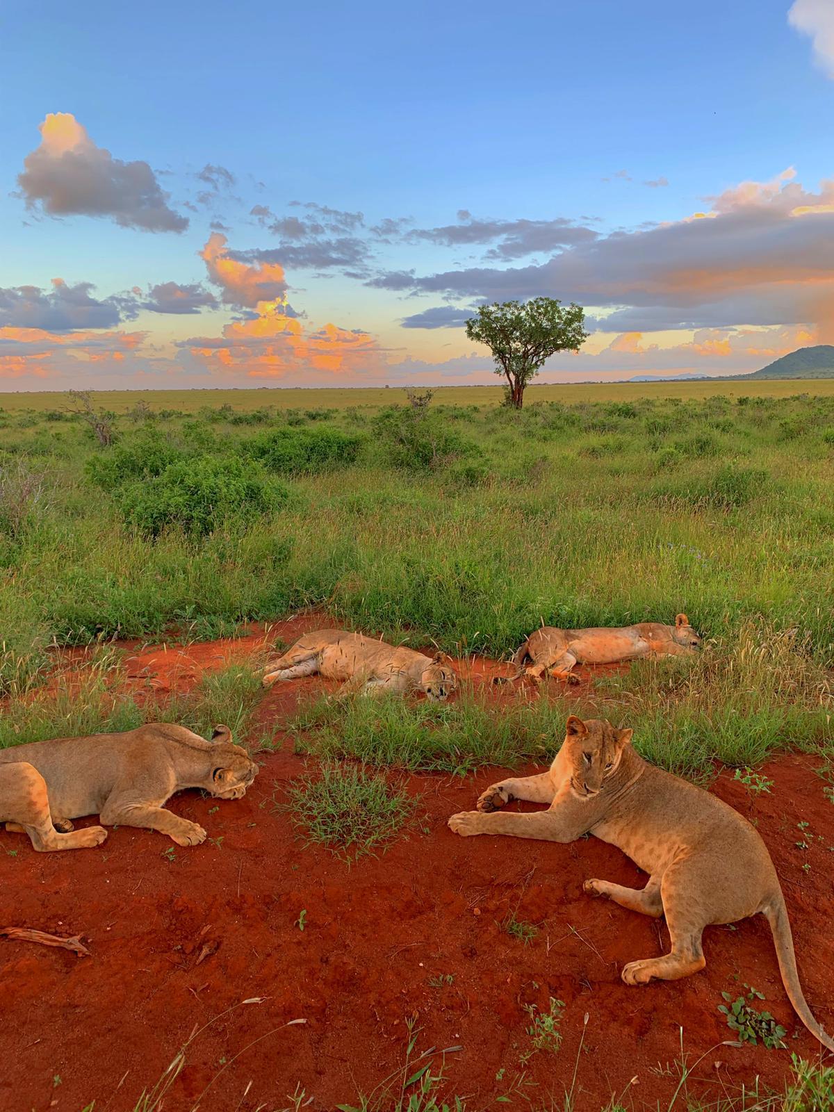 WhatsApp Image 2019 12 16 at 13.45.32 - Safari Masai Mara . Lago Nakuru . Amboseli . Taita Hills . Tsavo Est