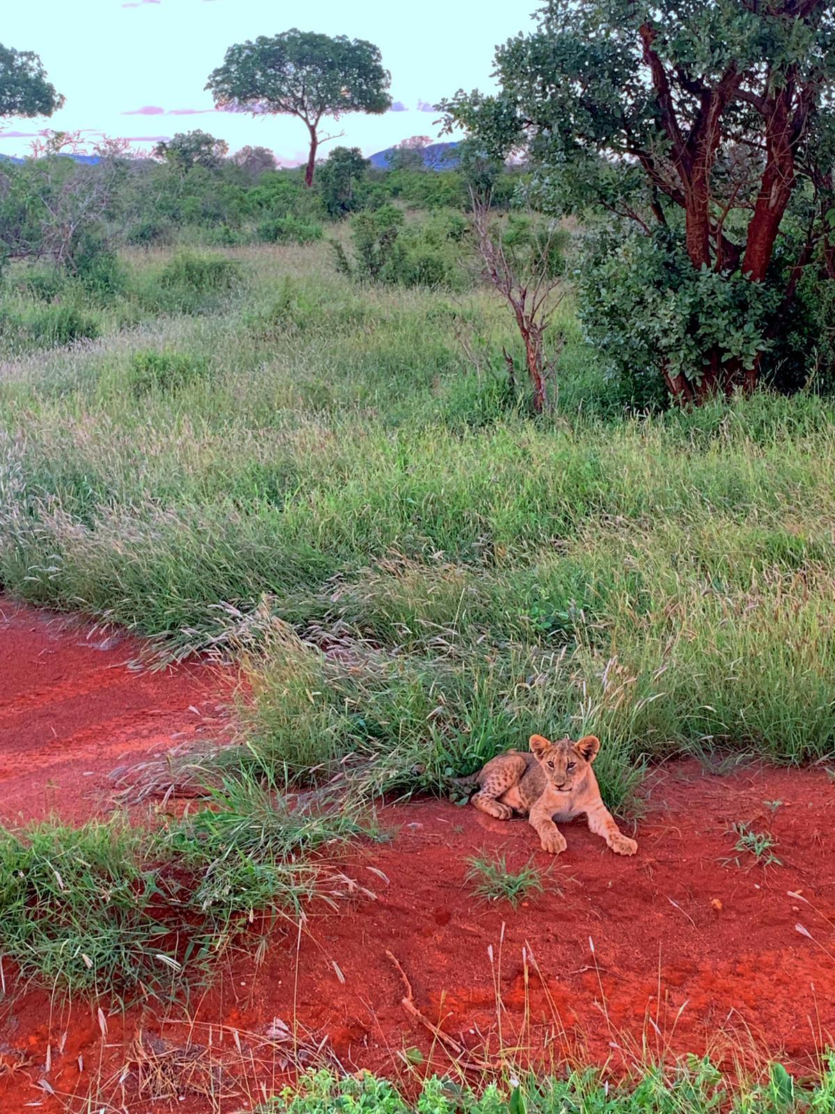 WhatsApp Image 2019 12 16 at 13.45.321 - Safari Samburu . Olpejeta . Lago Nakuru . Lago Bogoria . Lago Naivasha . Masai Mara . Nairobi . Amboseli . Tsavo Ovest . Taita Hills . Tsavo Est