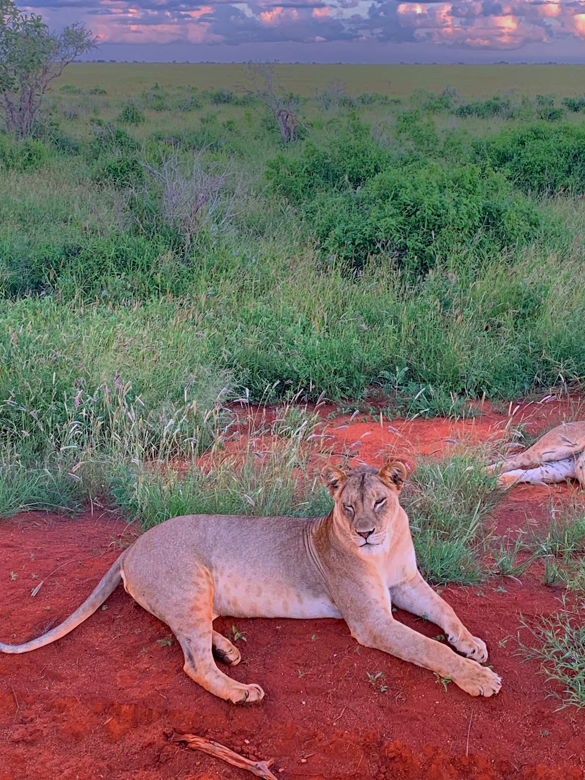 WhatsApp Image 2019 12 16 at 13.45.33 - Safari Samburu . Olpejeta . Lago Nakuru . Lago Bogoria . Lago Naivasha . Masai Mara . Nairobi . Amboseli . Tsavo Ovest . Taita Hills . Tsavo Est