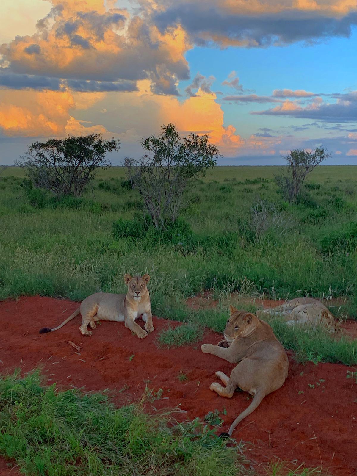 WhatsApp Image 2019 12 16 at 13.45.341 - Safari Masai Mara . Lago Nakuru . Amboseli . Taita Hills . Tsavo Est