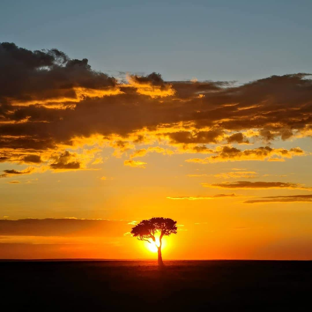 WhatsApp Image 2019 12 29 at 16.45.35 - Safari Masai Mara . Lago Nakuru . Amboseli . Taita Hills . Tsavo Est