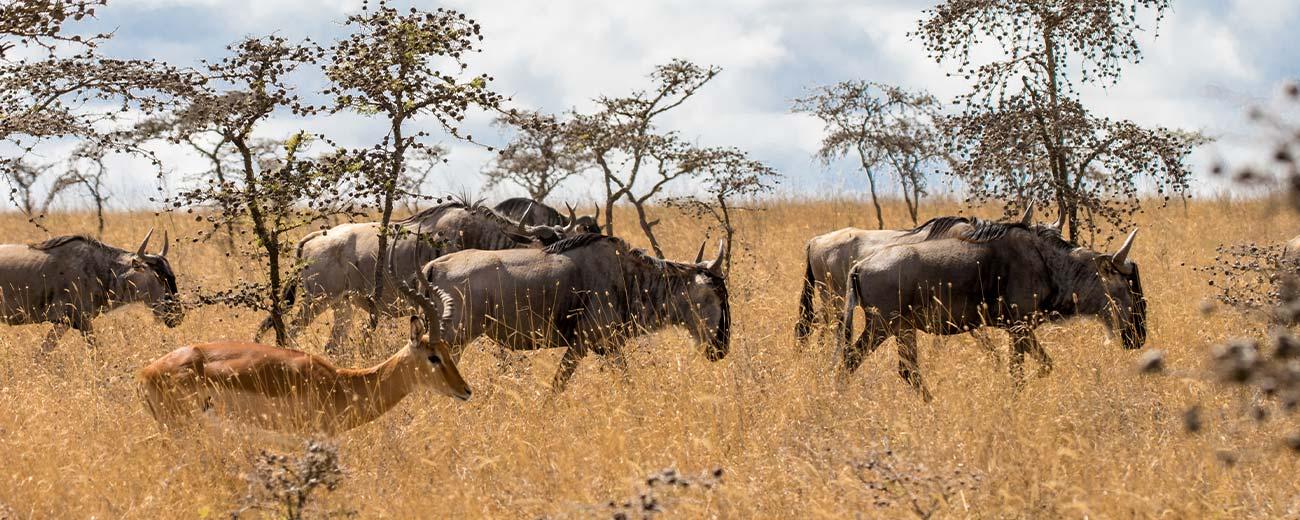 Safari Taita Hills